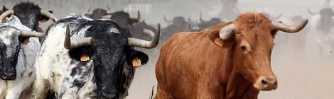 La ruta del toro, una manera diferente de conocer Cadiz