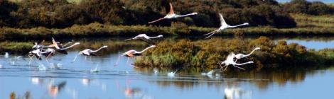Parque Natural de la Bahia de Cadiz