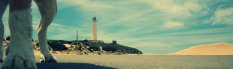 Playa para perros en El Puerto de Santa María, ¿A favor o en contra?