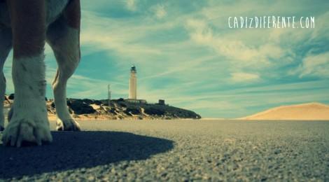 Playas de Cadiz con perros 2014