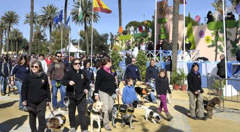 Festividad de San Antón Jerez 2018