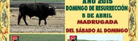 Toro del Aleluya de Paterna de Rivera 2015