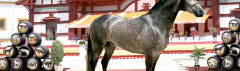 Pruebas hípicas de la Feria del Caballo de Jerez 2015: Fechas, Precios y Entradas