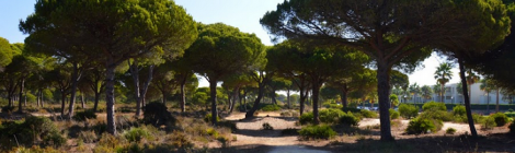Tres Rutas naturales de senderismo por chiclana de la Frontera 2015