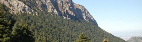 Ruta del Pinsapar en Grazalema